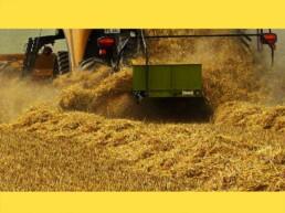 Kurzband-Halbschwad-Versetzer Strohmanagement Agribroker